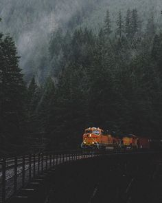 explore, forest, and nature image
