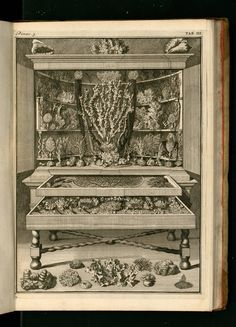 Levinus Vincent, Wondertooneel der nature, 1715