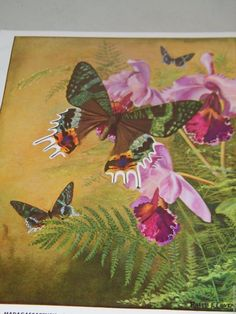 Ralph Coventry Print Chrysiridia Madagascarensis Butterfly Butterflies 16369