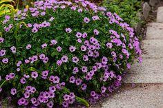 Green Garden, Flower Beds, Geraniums, Outdoor Decor, Flowers, Plants, Gardening, Women, Balcony