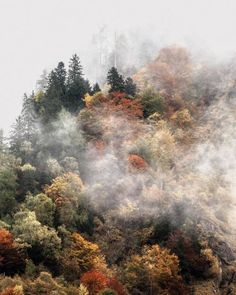 53 Ideas For Nature Trees Forest Fall Beautiful World, Beautiful Places, Beautiful Pictures, Fall Inspiration, Fall Collection, Nature Sauvage, Autumn Aesthetic, Adventure Is Out There, Nature Photos
