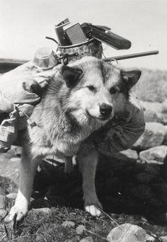 nunavut dog sled race