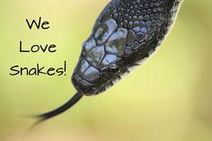 Do you love snakes?