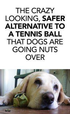 Bonus: it feeds shelter dogs!