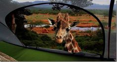 Tentsile Treehouse Tent Giraffe