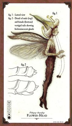 Arthur Spiderwick's Field Guide to the Fantastical World Around You by Holly Black and Tony Diterlizzi. Description from pinterest.com. I searched for this on bing.com/images