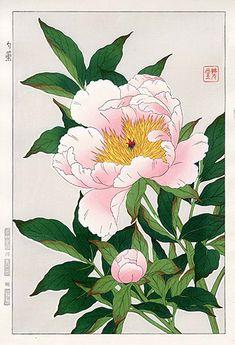 Peony (woodblock print) - Shodo Kawarazaki (1889-1973)