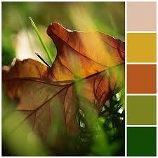 Znalezione obrazy dla zapytania orange colour