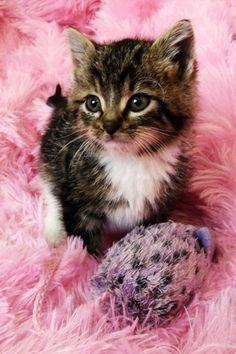 A kitten in pink fluffy stuff