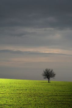 I have always loved that one lonely tree off in the distance. Not sure why but it reminds me that we are strong even if we are the only one standing