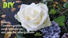 DekoideenLand DIY Gewachste Rosen,  Zannenzapfen und Koniferen selber machen für eine ...