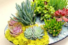 Pictured is ANOTHER WORLD large bowl filled with ten beautiful succulents. The plants are chosen appropriately as if something you would see