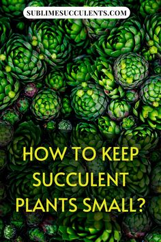 Sharing with you how to keep your succulent plants small. So, you've picked out the perfect tiny succulents for your project or collection, but what happens when they get too big? Instead of replanting your garden every time your succulents outgrow it, there are a few steps you can take to keep your succulents as small as possible. Check this pin! #succulentgarden #succulent #smallsucculents Flowering Succulents, Types Of Succulents, Cacti And Succulents, Planting Succulents, Succulent Planter Diy, Succulent Care, Succulent Arrangements, Succulent Species, Small Cactus