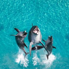 ~~Not furry but I love them just as much as all the furry ones!!~~ :-D Dolphins Dancing---- Aweee love my dolphins - Stop the Dolphin and Orca Slaughter NOW