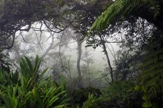 sobrevivencia-selva-mata-fechada-a-bussola-quebrada