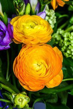 Flores para ter em casa (Foto: Getty Images)                                                                                                                                                     Más