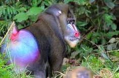 Resultado de imagen para animales en peligro de extincion