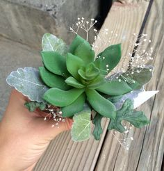 Succulent wrist corsage with mixed greens and sparkly babies breath
