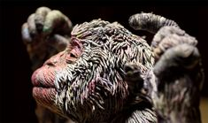 Japanese paper artist Chie Hitotsuyama deftly creates textured sculptures of animals using a technique involving rolled strips of wet newspaper. The compact application of each newspaper segment proves to be an elegant method of forming the wild fur of snow monkeys or the density of scales found