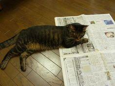 ネコと新聞12