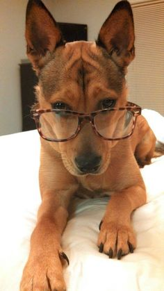 Pet Perspective - Even animals wear glasses :)