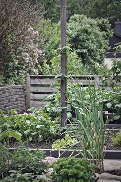 Trädgårdsinspiration. Upphöjda odlingsbäddar oljade i grått fyllda med örter och annat grönt