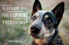 A Senior Dog....
