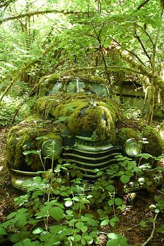 This feels like it is out in the Pacific Northwest.  This moss is not kind to an old 1941 Oldsmobile Coupe.  Dig it out and have it up on jacks beside the man cave, and have Eastwood Tools on speed dial.