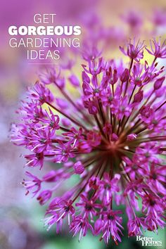 Create the perfect front yard and backyard landscapes with our gardening tips. We'll tell you about beautiful annual, perennial, bulb, and rose flowers, as well as trees, shrubs, and groundcovers that put on a year-round gardening show.