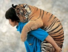 young tiger and boy, uncredited
