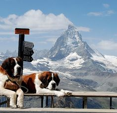 Matterhorn, Switzerland.  I went here many years ago.  Woke up to find the cutest and biggest dogs (Saint Bernards) I'd ever seen! Since then if I were to get a dog, i'd love to get one of them <3