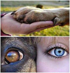 ♥ great picture! True love!
