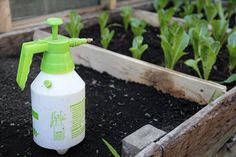 Fertilizantes caseros y ecológicos