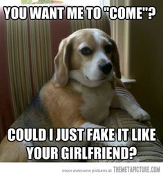Judgmental Dog is definitely a meme I could love