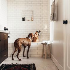 White subway tile bathroom, baths with dogs, Velcro dog