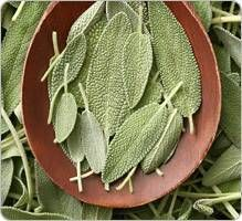 SAUGE (Salvia officinalis) :: Indications et posologie Natural Health Remedies, Herbal Remedies, Yogurt Nutrition, Sante Bio, Sources Of Vitamin A, Alternative Health, Medicinal Plants, Natural Medicine, Healthy Smoothies