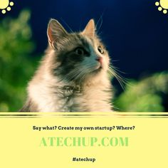Cats love small spaces but not if they're in cages. Enjoy coffee & meandering cats in our cafe. Pilates, Curiosity Killed The Cat, Kegel, Cat Cafe, Hash Tag, Cat Quotes, Crazy Cat Lady, Cat Toys, Cat Memes