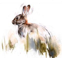 Dziki królik Lucy Newton