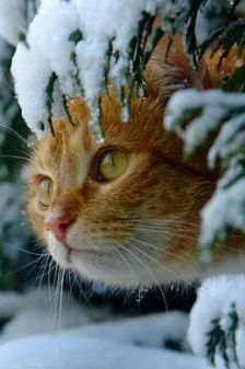 Winter Cat Care Safety Tips Amor Animal, Mundo Animal, Cute Kittens, Cats And Kittens, Crazy Cat Lady, Crazy Cats, Beautiful Cats, Animals Beautiful, Funny Animals