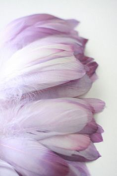 Lilac....❤