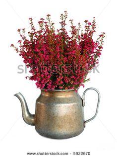 Bunch of heather in vintage metal pot, isolated by Michaela Stejskalova, via ShutterStock