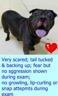 SUPER URGENT Staten Island Center MIA – A1078056  ***DOH HOLD – B***  SPAYED FEMALE, BLACK, CHINESE SHARPEI / PUG, 9 yrs OWNER SUR – ONHOLDHERE, HOLD FOR DOH-B Reason CHILDCONFL Intake condition UNSPECIFIE Intake Date 06/19/2016 http://nycdogs.urgentpodr.org/2016/06/mia-a1078056/