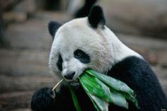 To Cheer Up Sad Panda, Zoo Workers Build Amusement Park