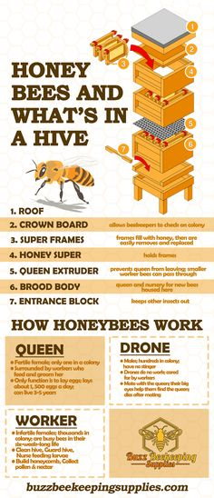 Bee Hives Boxes, Beekeeping Supplies, Bee Hive Plans, Farm Layout, Worker Bee, Honey Benefits, Bugs And Insects, Honey Bees, Save The Bees
