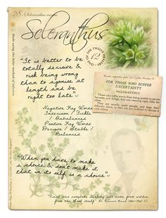 Scleranthus bach flower Poster