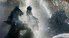 Paris, fontaine des quatre parties du monde en eaux... Les chevaux d'Emmanuel Fremiet (1824-1910)  Grand format