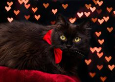 by Thunderi on DeviantArt Christmas Cats, Merry Christmas, Deviantart, Artist, Animals, Merry Little Christmas, Animales, Animaux, Artists