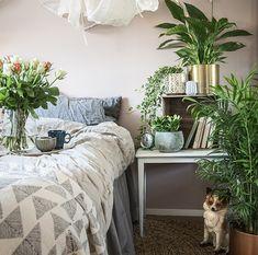 http://www.plantasjen.no/luftrensende-planter