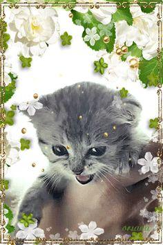 Маленький котенок - анимация на телефон №1330424