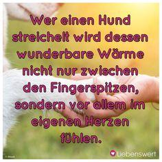 Wer einen Hund streichelt wird dessen wunderbare Wärme nicht nur zwischen den Fingerspitzen, sondern vor allem im eigenen Herzen fühlen.